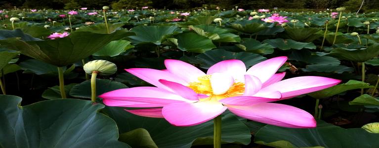 lotus asia mobile casino